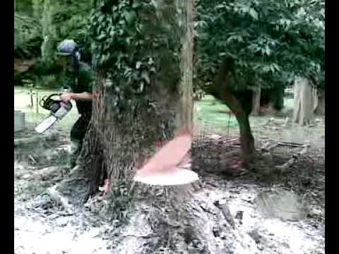 Lime tree removal