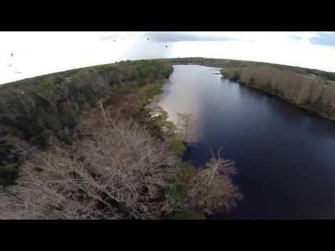 Drone Flying with Florida Vultures - The real birds eye view - www.HobbyFlip.com