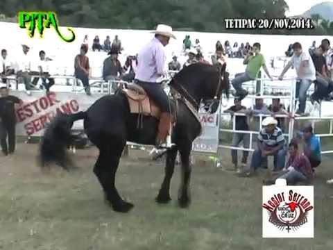 tetipacgro20-de-novnestor-serrano-de-rancho-la-cruz.html