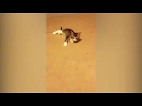 鏡を見た子猫の反応が可愛すぎた♪