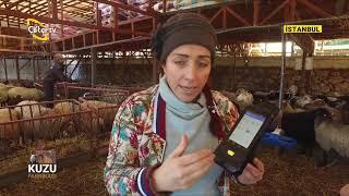 Kuzu Fabrikası Nasıl Kurulur ? - KUZU FABRİKASI / Çiftçi TV