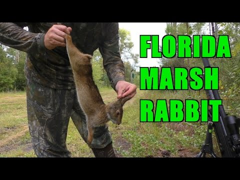 Hunting Florida Marsh Rabbits with the Airgun