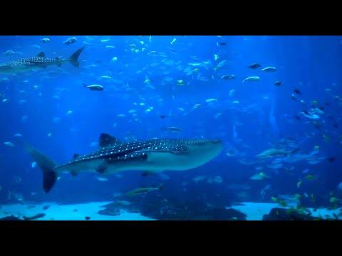 6 Hours Peaceful & Relaxing Aquarium - Ocean Voyager I - for DEEP SLEEP