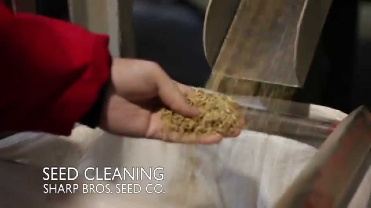 Seed Sharp Seed Cleaning Sharp Bros