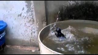 El pobre gato que no puede escapar del agua