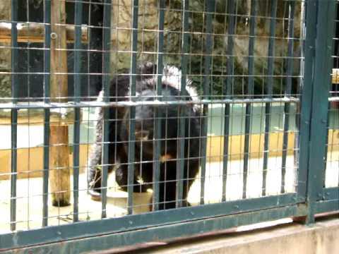 マレーグマby野毛山動物園