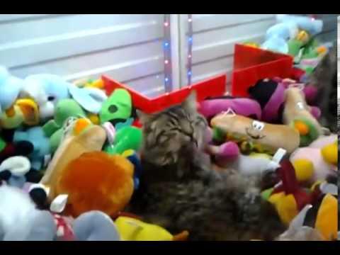 Gatos - El secreto de las máquinas de peluches