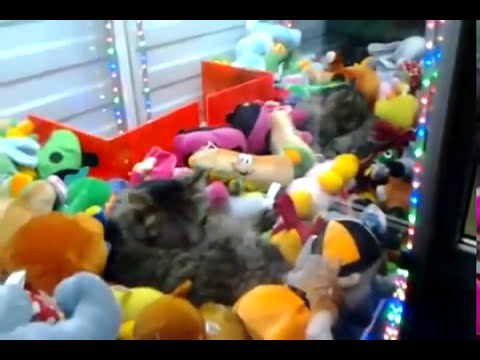 How to get a cat from a claw machine