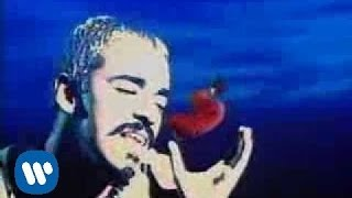 Download Lagu Café Tacvba - Las Flores (Video Oficial) Gratis STAFABAND
