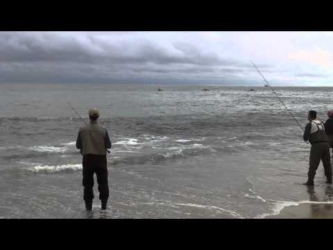 Montauk Fishing Report on Striped Bass Fishing With Tube And Worm Using Gulp Striped