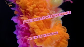🔮✨WHO WANTS YOU RIGHT NOW 💞? * pick a card special * 👁 #tarotreading