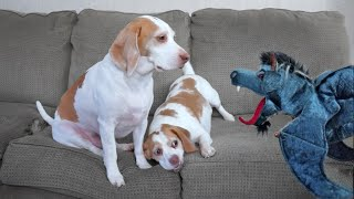 Dogs vs. Dragon Puppet: Cute Beagle Dogs Maymo & Penny