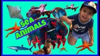 Learn SEA ANIMAL Names Fun Toys Video for Children Ocean Animals