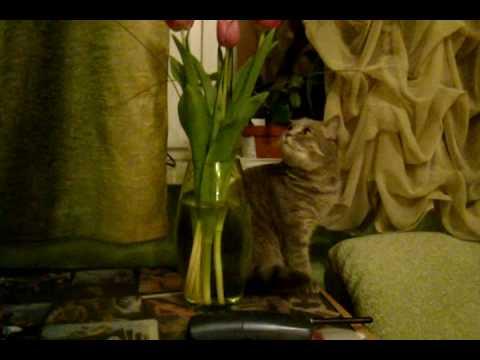 My cat Bella - 3