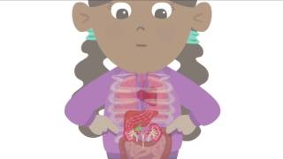 BBC Learning - Major Organs of the Human Body