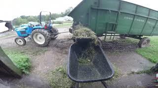 download lagu Feeding Green Chop To The Cows gratis
