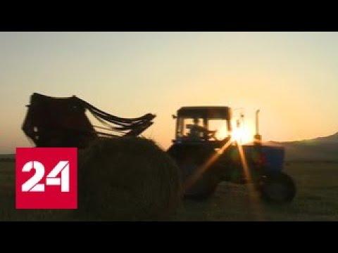 Санкции разогнали метаболизм российского агросектора