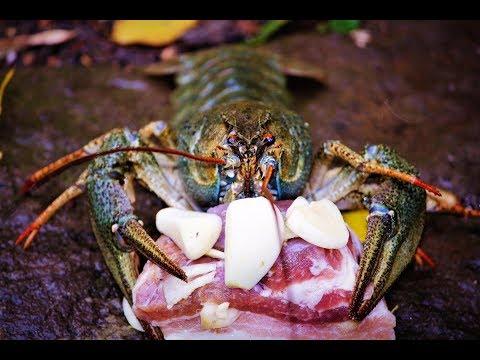 Ловля раков на сало с чесноком,результат удивил (Дневник рыболова)