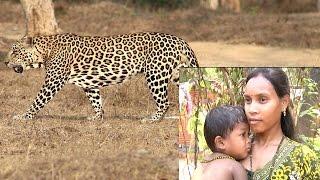 হিংস্র চিতা বাঘের মুখ থেকে যেভাবে ছেলেকে জীবন্ত ফিরিয়ে আনলেন মা |  Indian Leopard Attack