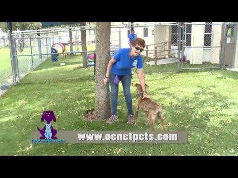 Orange County Animal Services - I Volunteer Because . . . Barb