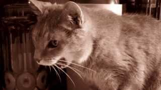 Cat Steals and Munches Potato Chips!
