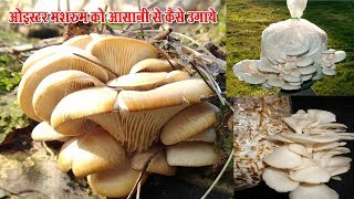 How Grow Oyster Mushroom Faster (Garden Home)