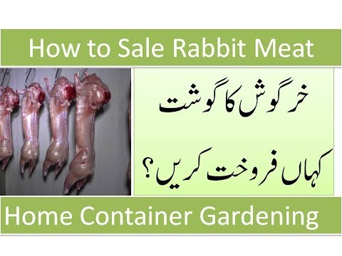 How to Sale Rabbit's Meat