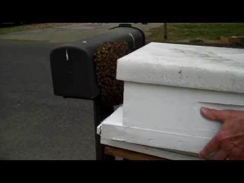 Honeybee Swarm On Mail Box