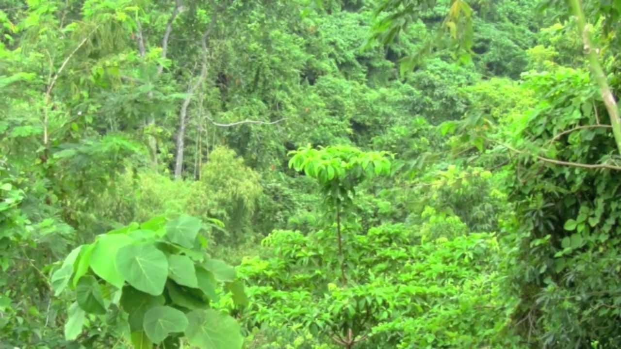 Tropischer Regenwald (HD) - YouTube