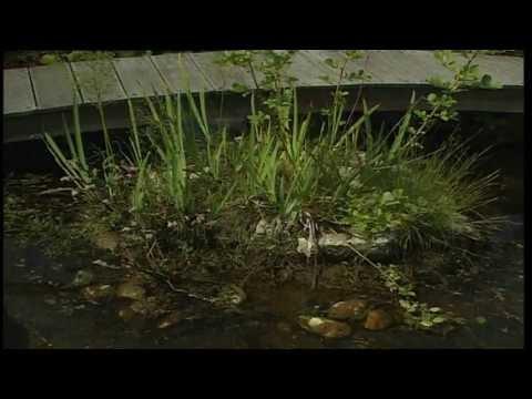 Gartentipps, Teichreinigung, So Geht Die Säuberung Des Gewässers