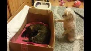 Um Cachorro Morre De Vontade De Ver Os Gatinhos Rec�m-nascidos, Mas Veja O Que Ele Faz...
