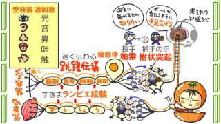 生物4章1話「刺激と反応」byWEB玉塾