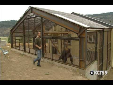 KCTS 9 Connects: Chimp Sanctuary