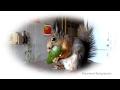 видео Один день из жизни белки Нобеля. Tame squirrel ... смотреть ролики