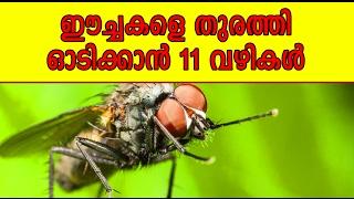 ഈച്ചകളെ തുരത്തി ഓടിക്കാൻ 11 വഴികൾ | Malayalam Health Tips | Life Hacks Malayalam