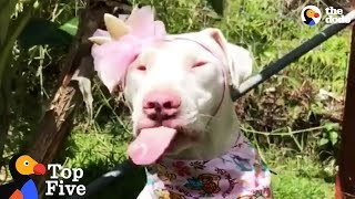 Blind And Deaf Rescue Dog Doesn't Know She's Any Different + Inspiring Dog Rescues | The Dodo Top 5