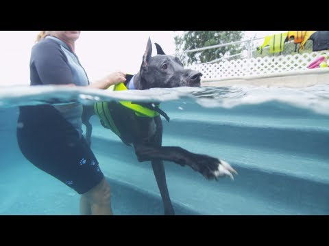 Dog Swimming -