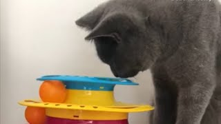 This curious kitty gets his head stuck inside his new toy