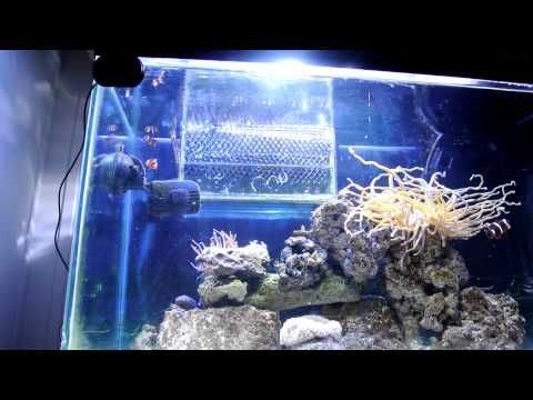 fluval sea protien skimmer review and tank update