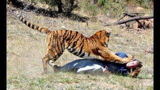 Si No Lo Hubieran Grabado Nadie Creeria estos Hechos TERRIBLES ATAQUES De ANIMALES ¡¡