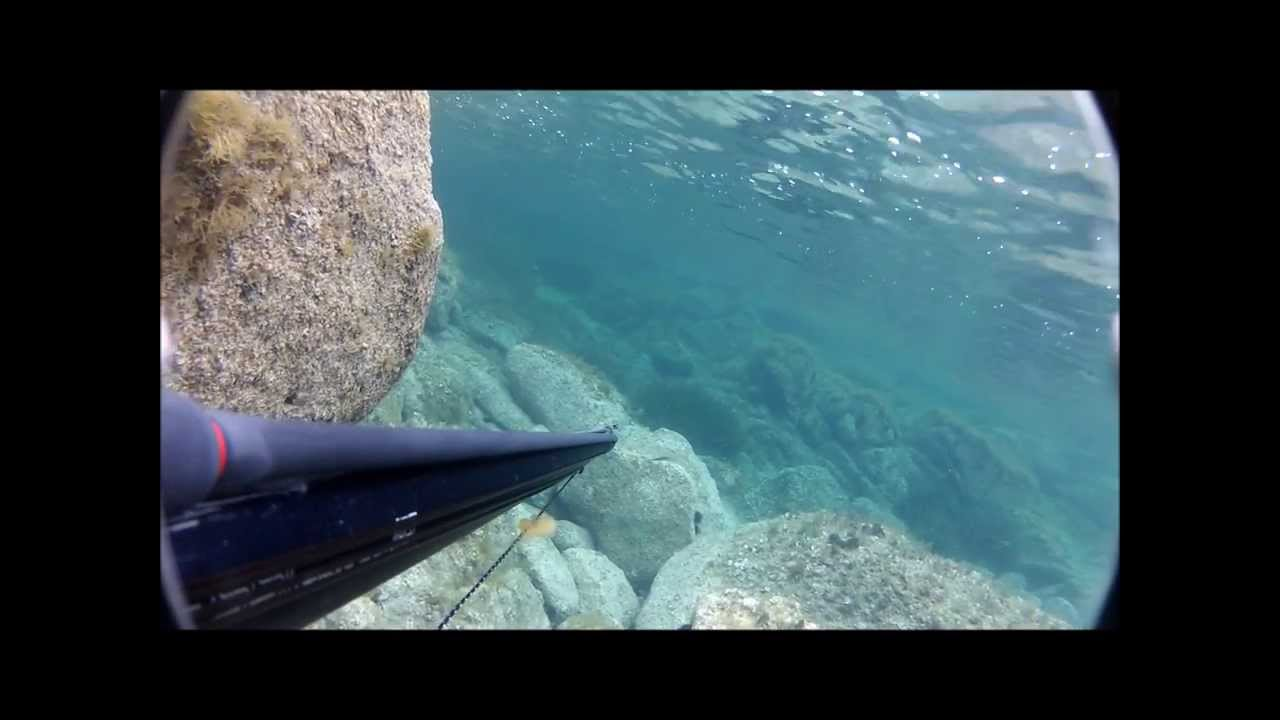 Equipements Blue Water Hunting  Chasse Sous Marine