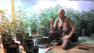 Low Rider Pots For Cannabis Cultivation.