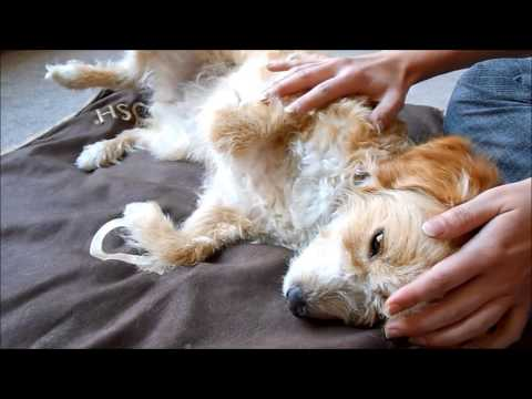 ASMR RP Soft spoken - Receptionist & ASMR Animal Health Clinic