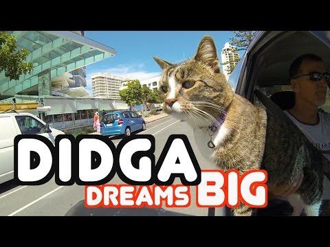 犬のトリックに触発され真似をする猫のDIDGA
