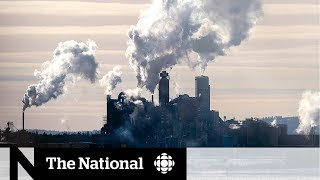 Nova Scotia forces closure of Northern Pulp mill