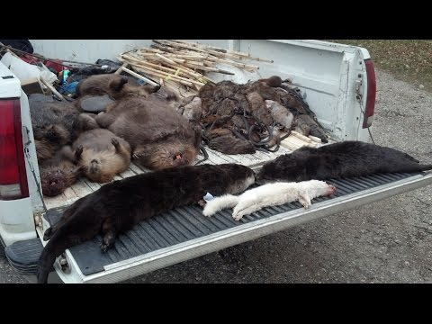 Amazing Otter Trapping Video Crossover sets with 220s!!