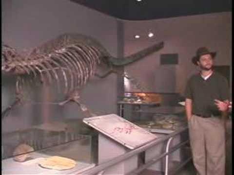 Dallas Museum of Natural History Dinosaurs