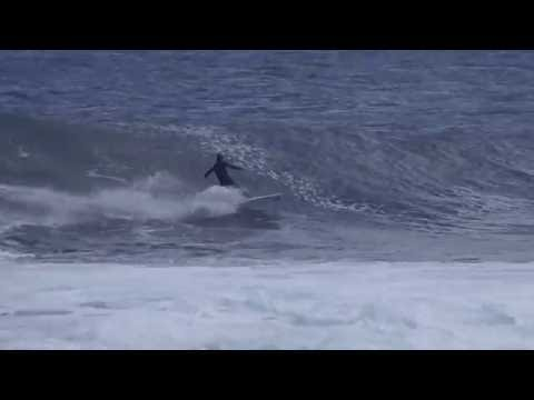 サーファーとジャンプしたイルカが衝突するまさかのハプニング!