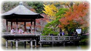 2016成田山公園・紅葉まつり(千葉県成田市)Colored Leaves Feastival2016  Naritsan Shinshoji Tenple