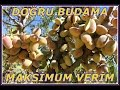 BADEM BUDAMA Part:1 HD  Feyzettin Dursun www.bademcilik.com mp3 indir